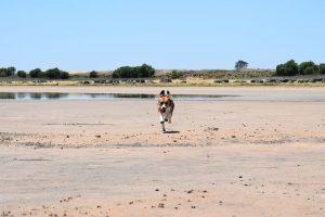 imagen de un beagle corriendo en la playa pasando un dia explendido