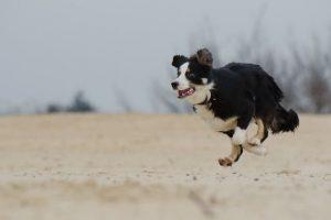 imagen de un perro collie en la playa