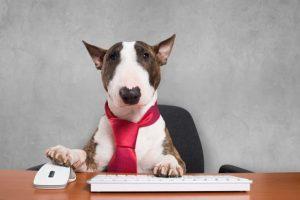 imagen de un bull terrier en la oficina