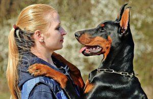 perro doberman con su dueña