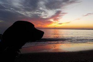 perro labrador atardecer playa