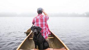 perro labrador negro barca rio amigo fiel