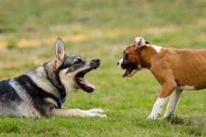 perros pastor alemán juegos