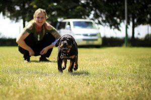 perro rottweiler cachorro correr familia feliz
