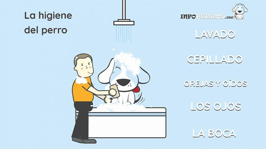Higiene-del-perro-esquema