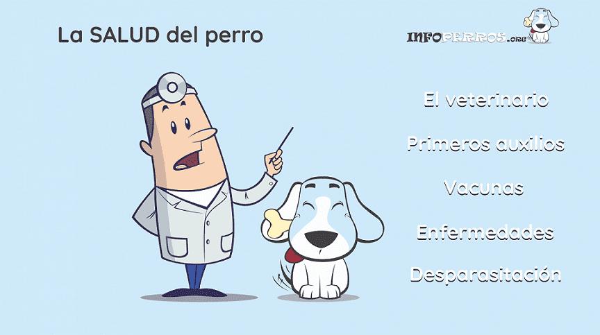 La-SALUD-del-perro