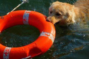 collie tecnicas de rescate dentro de agua