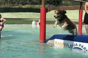 imagen de un perro de agua marron y blanco saltando al agua en el parque acuatico