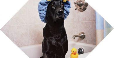 imagen de un perro en bañera con gorro