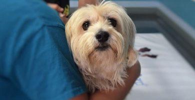 imagen de un perro veterinario